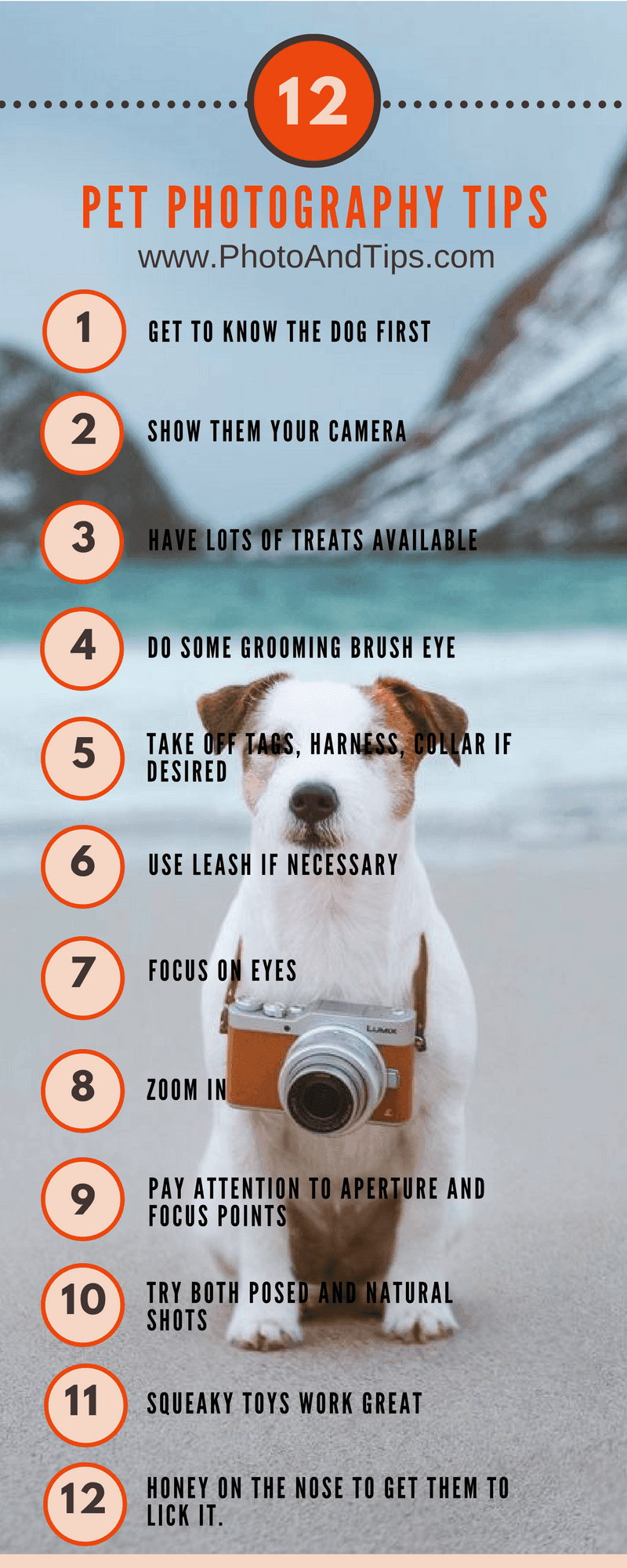 12_Pet_Photography_Tips